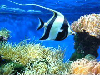 Quanto mi verrebe a costare un acquario di medie for Quanto vivono i pesci rossi