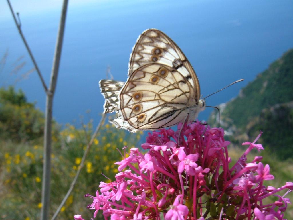 Farfalle e i colori della natura - Immagini di farfalle a colori ...
