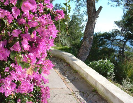 Pin casella sfondi viola papaveri fiori widescreen hd per for Sfondi hd viola