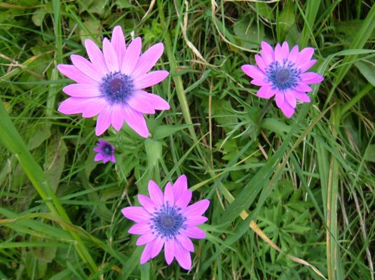 Foto di fiori fotografie di fiori della camapnia - Immagini di fiori tedeschi ...