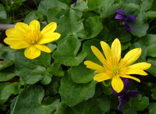 Foto di fiori fotografie di fiori della camapnia for Immagini fiori autunnali