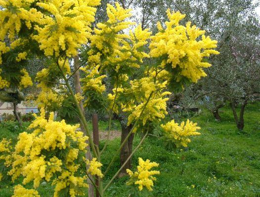 Foto di fiori fotografie di fiori della camapnia for Piante belle da giardino